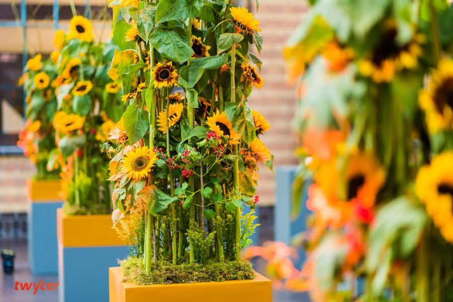 Zonnebloemen staand