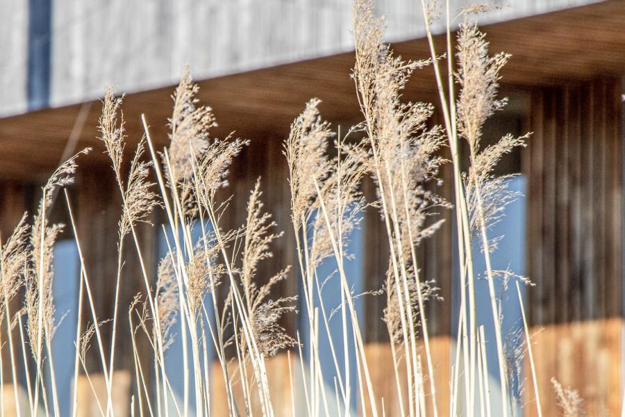 Pand met grassen